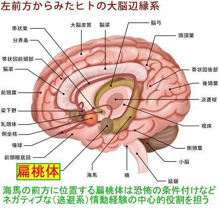 https://www.blog.crn.or.jp/report/m/gif/report_04_72_1.jpg